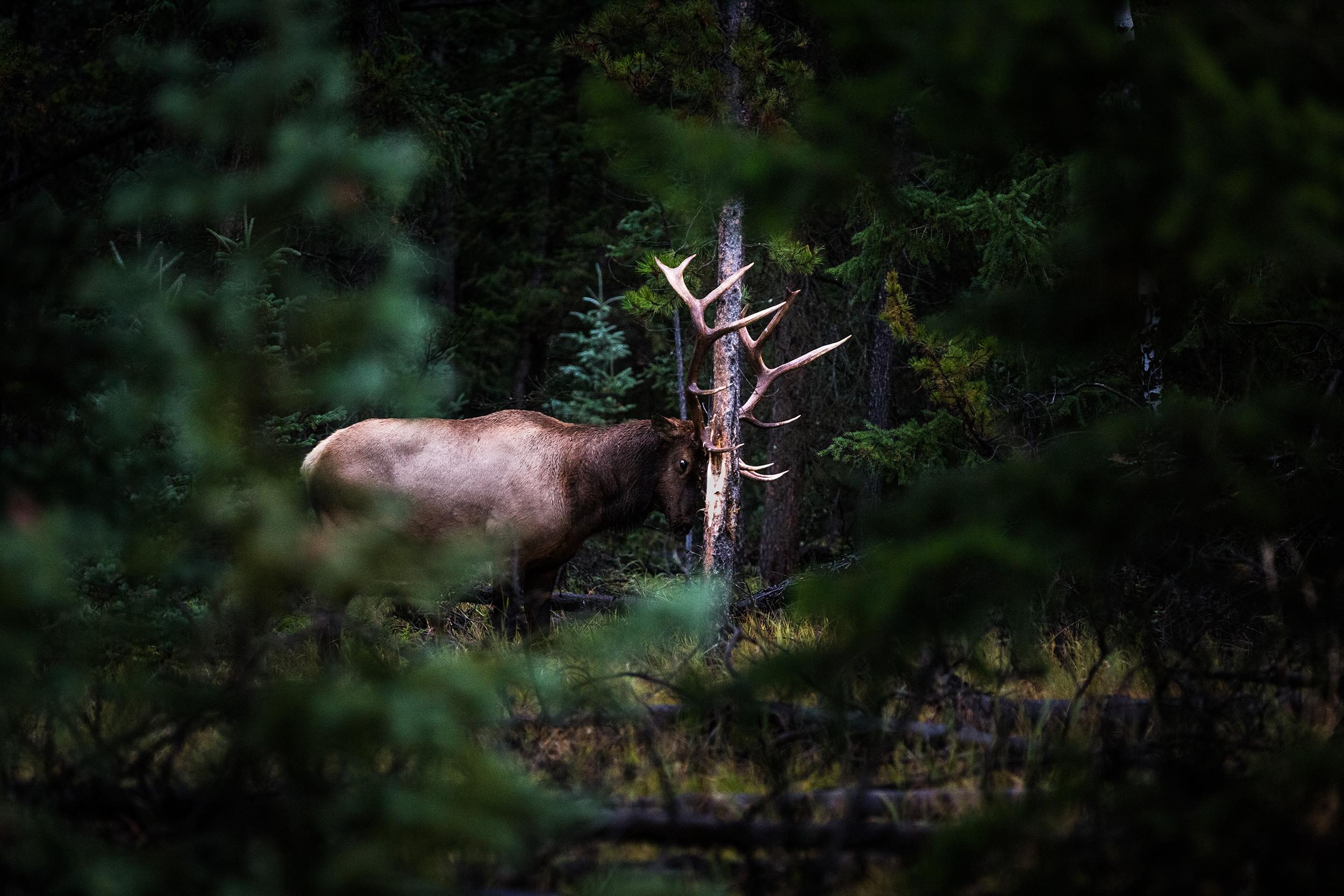 Elk Kit 2019 Hero Vv3 A6926